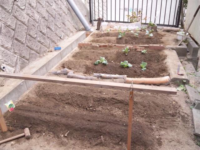 Joy Herb Garden その11