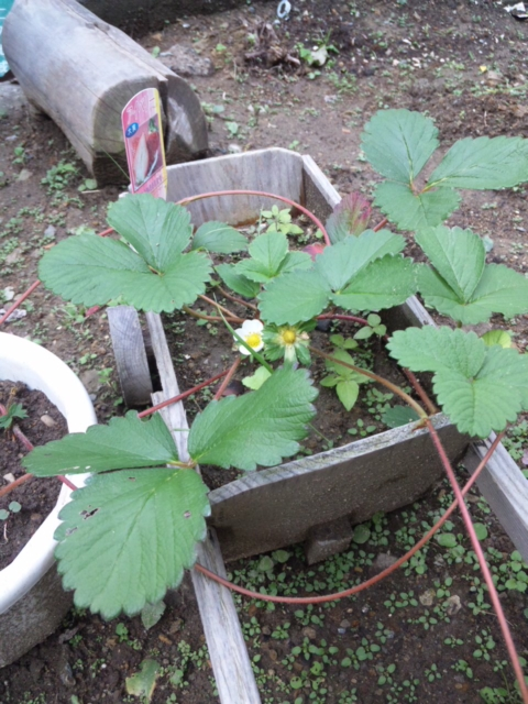 Joy Herb Garden その12