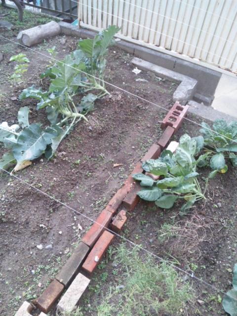Joy Herb Garden その13