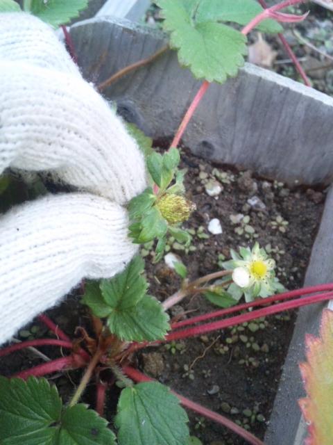 Joy Herb Garden その15