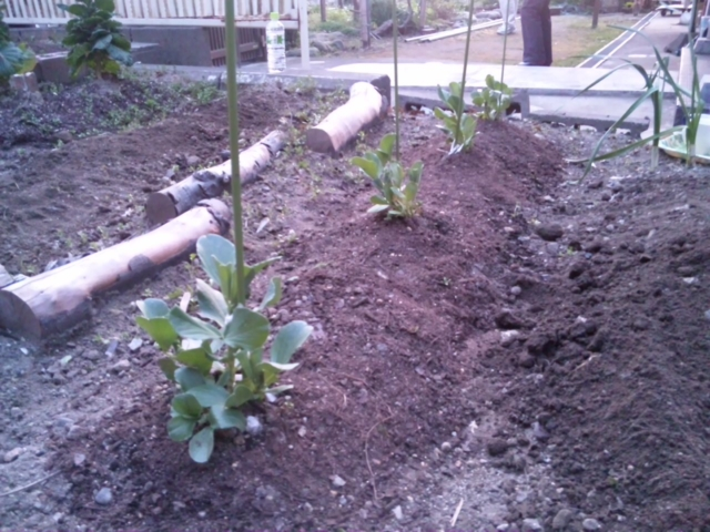 Joy Herb Garden【13】